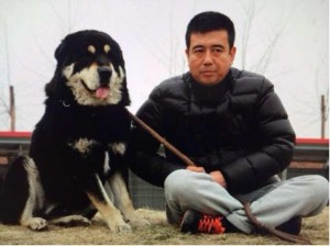 Mr. Zhang's aboriginal Tibetan mastiff from shepherding area of West China.