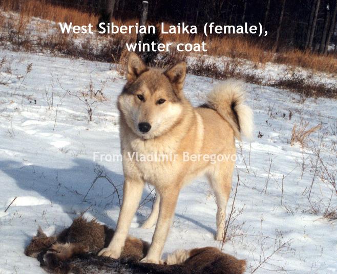 WSL2003 Nayda #2 winter coat wm